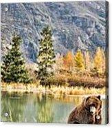 Brown Bear 206 Acrylic Print