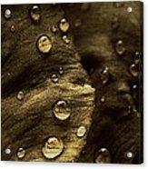 Brown Drops Of Rain Acrylic Print