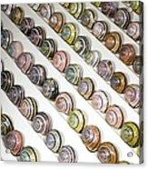 Brown-lipped Snail Colour Variants Acrylic Print