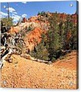 Bryce Canyon Canyon Acrylic Print