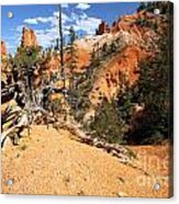 Bryce Canyon Forest Acrylic Print