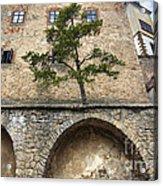 Buchlov Castle Acrylic Print