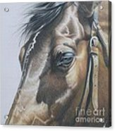 Buckles And Belts In Colored Pencil Acrylic Print
