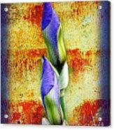 Buddies Acrylic Print by Andee Design