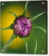 Budding Flower Acrylic Print