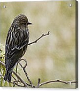 Budding Spring Song Acrylic Print
