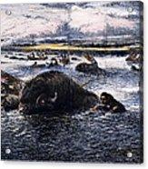 Buffalo Hunt, 1874 Acrylic Print