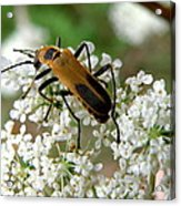 Bug And Flowers Acrylic Print