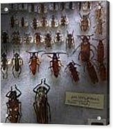 Bug Collector - So What's Bugging You Acrylic Print by Mike Savad