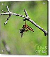 Bug Eat Bug Acrylic Print