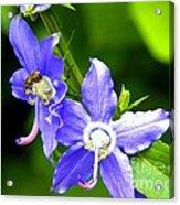 Bug On Blue Acrylic Print