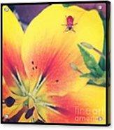 Bug On Lily Acrylic Print