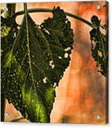 Buggilicious Acrylic Print