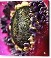 Bulb Flower Acrylic Print