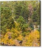 Bull Elk Lake Crusing With Autumn Colors Acrylic Print
