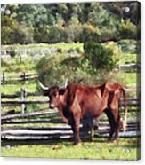 Bull In Pasture Acrylic Print by Susan Savad