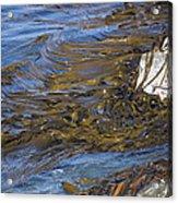 Bull Kelp Bed Acrylic Print by Bob Gibbons
