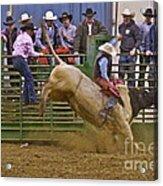 Bull Rider 2 Acrylic Print by Sean Griffin