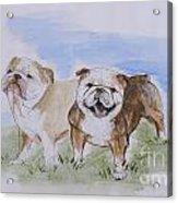 Bulldog Tough Love Acrylic Print