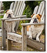 Bulldogs Relaxing At The Beach Acrylic Print