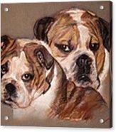 Bulldogs Acrylic Print
