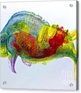 Bullfish Acrylic Print