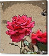 Bumble Bee And Rose Acrylic Print