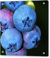 Bunch Of Blueberries Acrylic Print