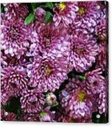 Bunch Of Chrysanths Acrylic Print