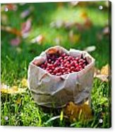 Bunch Of Cranberries Acrylic Print