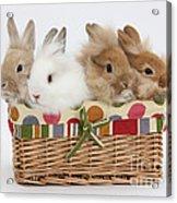 Bunnies In A Basket Acrylic Print