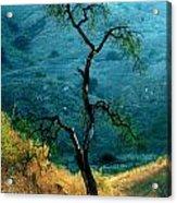 Burned Oak Tree Calabasas Acrylic Print