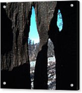 Burned Trees 10 Acrylic Print