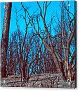 Burned Trees And The Sky Acrylic Print