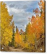 Burning Orange And Gold Autumn Aspens Back Country Colorado Road Acrylic Print