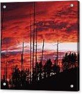 Burnt Trees Against A Sunset Acrylic Print