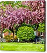 Bursting Blossoms Acrylic Print