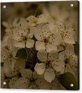 Bushel Of Flowers Acrylic Print