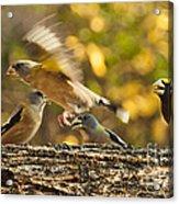 Busy Birds Acrylic Print
