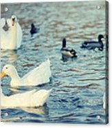 Busy Pond Acrylic Print