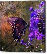 Busy Spicebush Butterfly Acrylic Print by J Larry Walker