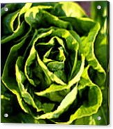 Buttercrunch Lettuce From Above Acrylic Print