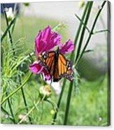 Butterflies Fly Acrylic Print