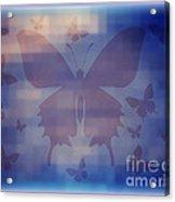 Butterflies In Blue Acrylic Print