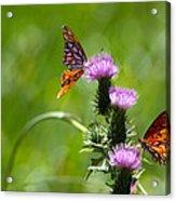Butterflies On Thistles Acrylic Print