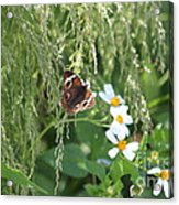 Butterfly 13 Acrylic Print