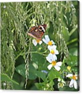 Butterfly 15 Acrylic Print