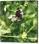 Butterfly 25 Acrylic Print