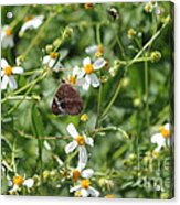 Butterfly 28 Acrylic Print