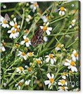 Butterfly 35 Acrylic Print